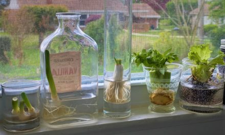 Grow your own food inside your house